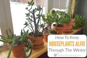 How To Keep Indoor Plants Alive In Winter