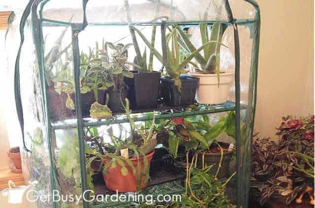 Keeping houseplants humid in winter