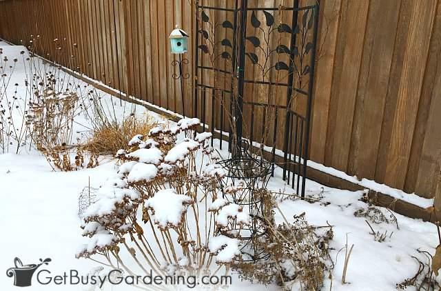 Lovely winter interest in the garden