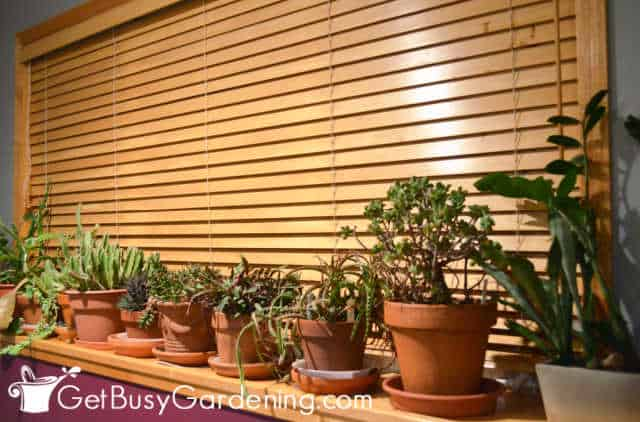 Protecting indoor plants from cold temperatures at night
