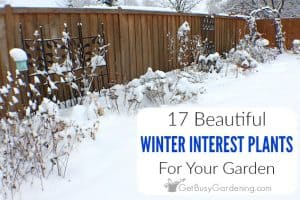 17 Winter Interest Plants For Your Garden