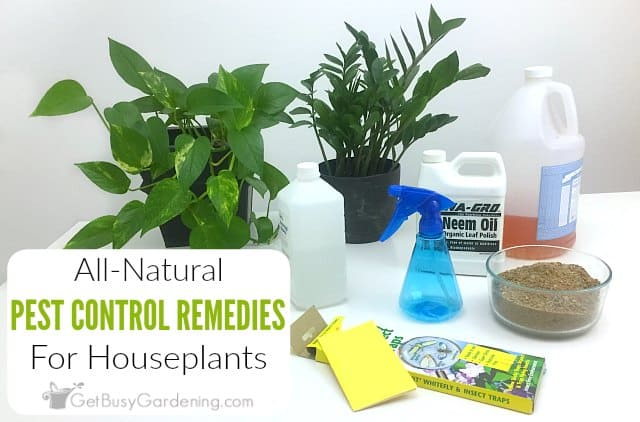 Natural Pest Control For Houseplants... Say NO To Toxic Pesticides!