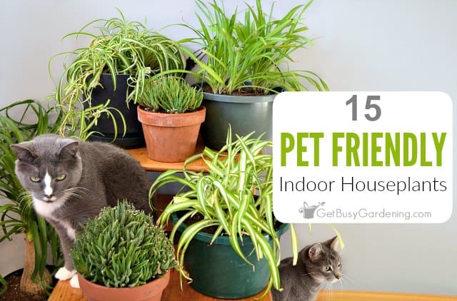 15 Pet Friendly Indoor Houseplants Safe For Cats And Dogs