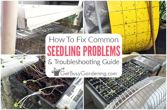 How To Fix Common Seedling Problems
