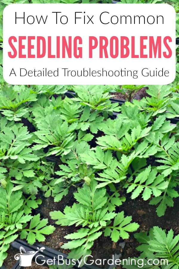 How To Fix Common Seedling Problems & Troubleshooting Guide