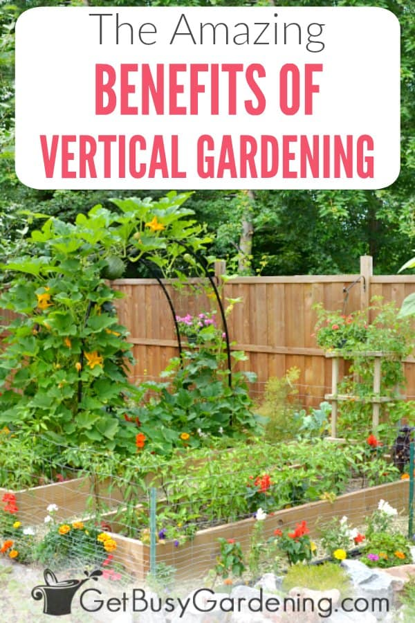 Whether you want to grow vegetables, herbs, fruits or flowers, there are tons of benefits of vertical gardening. One of the biggest is that it's a huge space saver in the home garden, so you can grow more in less space, or in small spaces. But there are so many other important benefits too. Vertical gardens are easier to maintain, healthier, produce better crops, and help prevent pest and disease problems. Learn all of the advantages of vertical gardening.