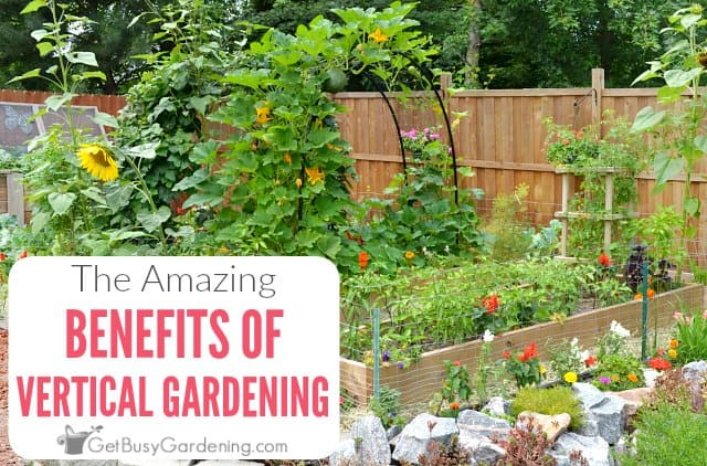 The Amazing Benefits Of Vertical Gardening