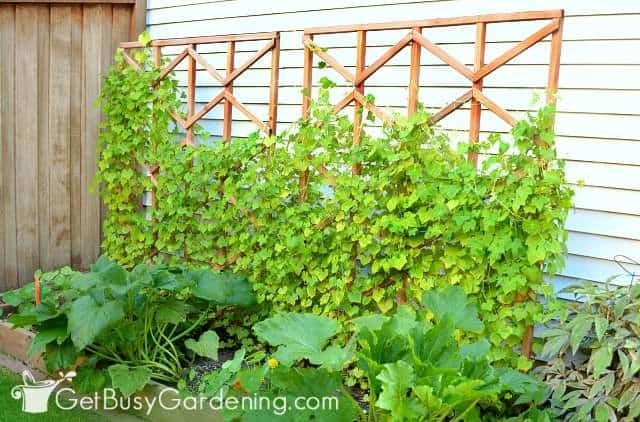 DIY plant trellises made out of wood