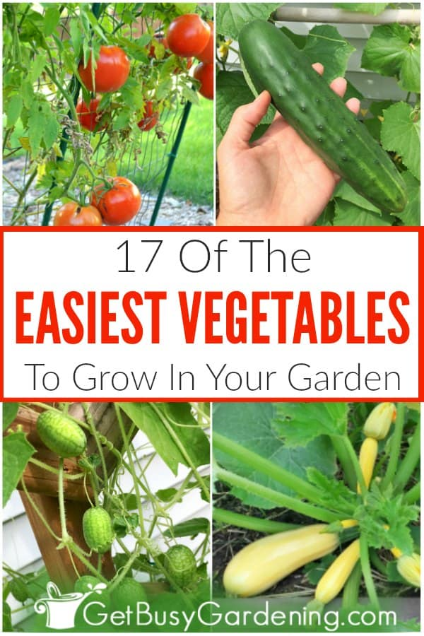 17 Of The Easiest Vegetables To Grow In Your Garden