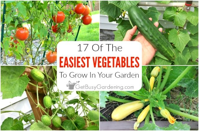 17 Easy Vegetables To Grow In Your Garden