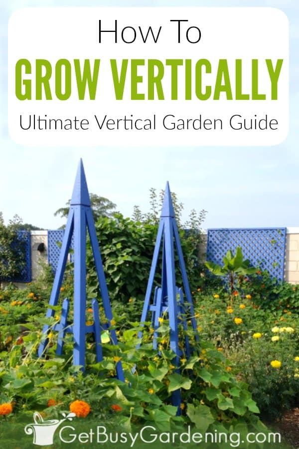 Growing vertically is the perfect way to add beauty to your flower garden, and increase food yield in the vegetable garden. From training vines to grow on a trellis or fence in large backyards, to using vertical planters for the patio or other small spaces, this guide has it all. Discover all the awesome details, including benefits and techniques, as wells as design and care tips. Plus you'll learn how to choose structures and plants, and how to build DIY projects.