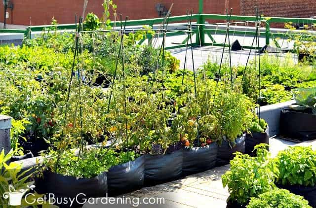 Vertical container gardens can grow wherever you have sun
