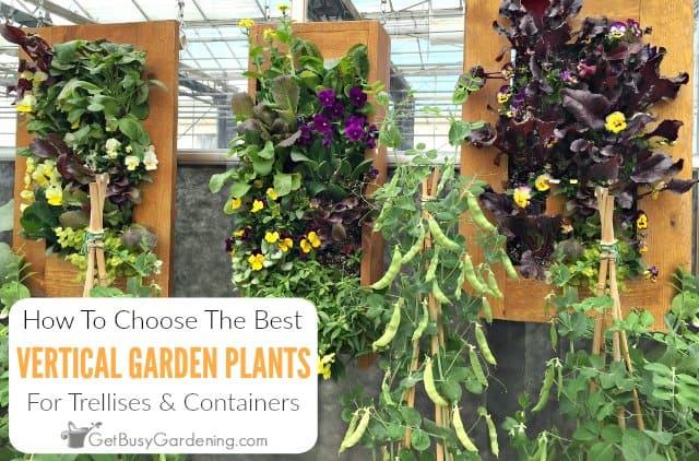 How To Choose The Best Vertical Garden Plants