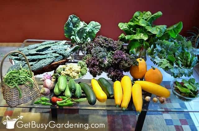 Fresh veggies harvested from my home vegetable garden