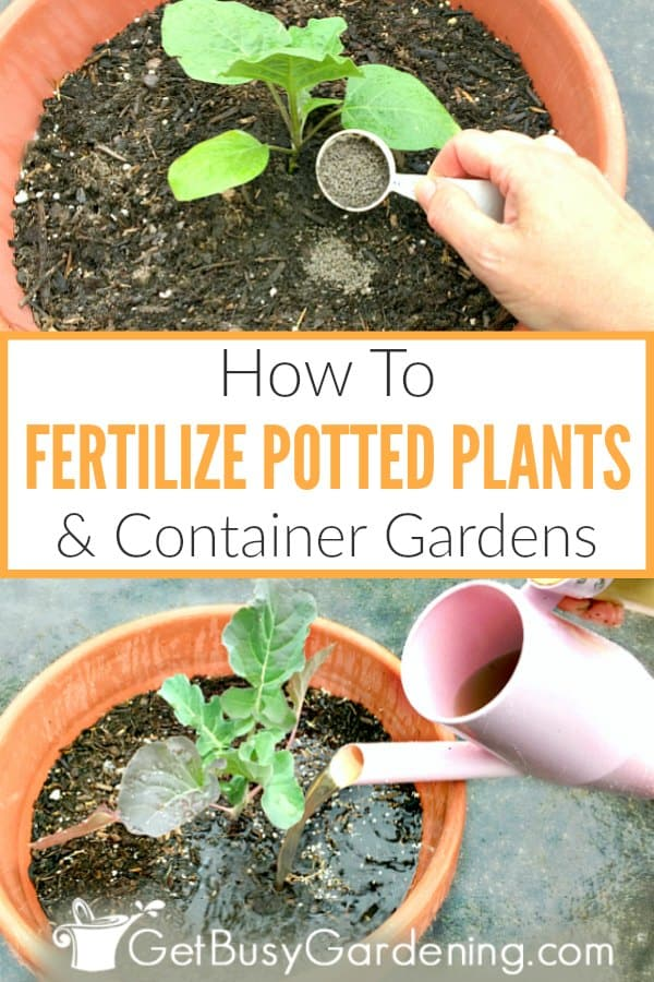 How To Fertilize Potted Plants & Container Gardens