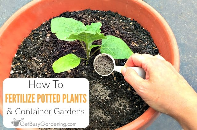 How To Fertilize Outdoor Potted Plants & Containers