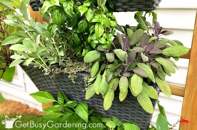Hanging baskets filled with a soil mix for planters