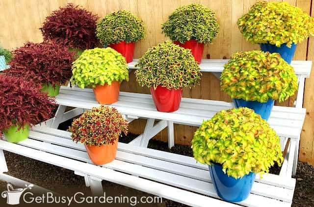 Best Container Plants For Pots Outdoors, What Plants Are Good For Patio Planters