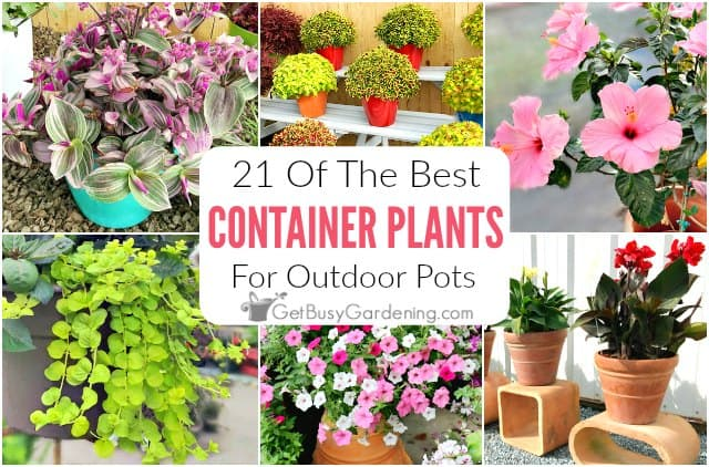 Best Container Plants For Pots Outdoors, Best Large Potted Plants For Patio