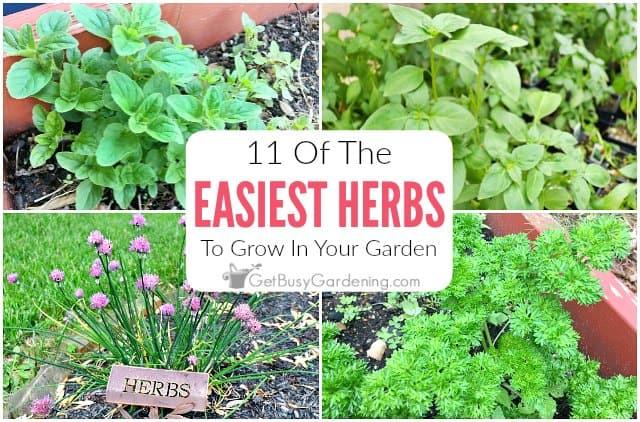 11 Easy Herbs To Grow In Your Garden
