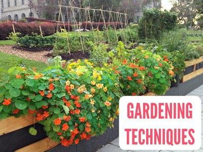 Gardening Techniques