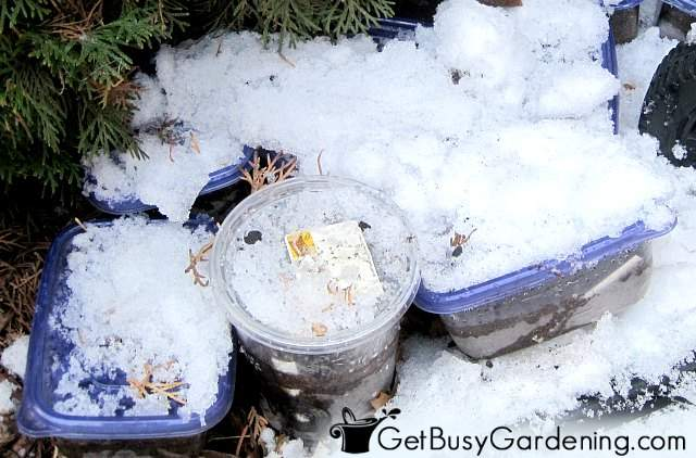 Covering containers with snow