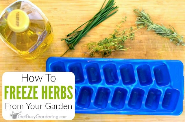 How To Freeze Herbs From The Garden