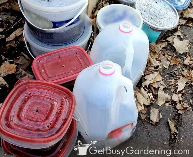 The last of my winter sown containers