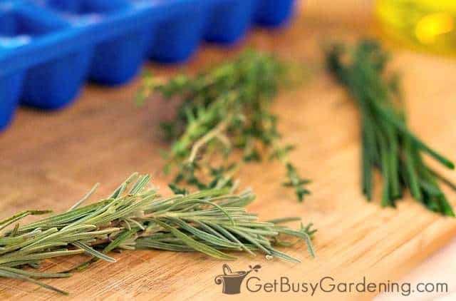 Various fresh herbs ready to be frozen