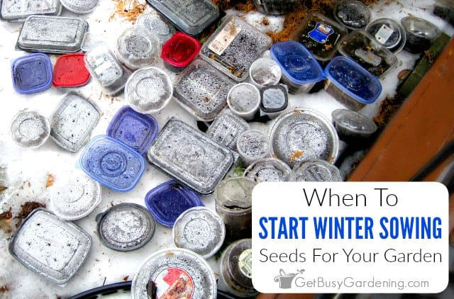 When To Start Winter Sowing Your Seeds
