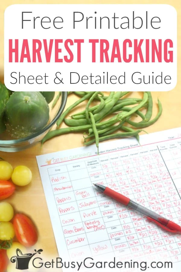 Tracking your harvests is a great way to see how well your garden performs each year. There are many benefits, including seeing how much total produce you grew, how much of each type of vegetable, help you plan for next year, calculate how much money you saved, and much more! This helpful illustrated guide will show you exactly how to record each harvest, step-by-step. Plus, download the FREE printable Garden Harvest Tracking Sheet to make it easy to record your crops.