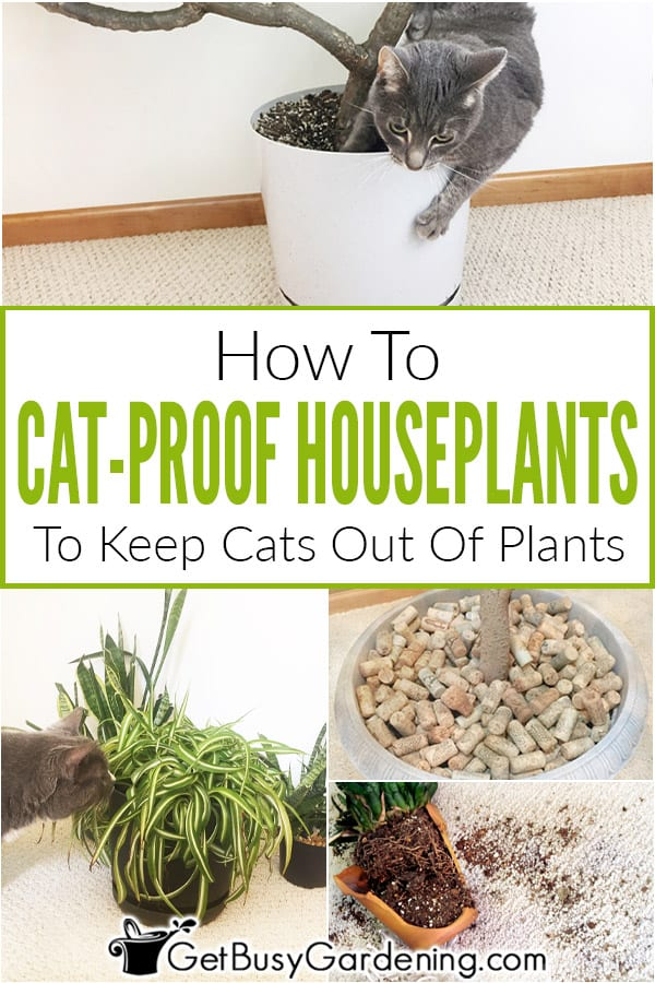 How To Cat-Proof Houseplants To Keep Cats Out Of Plants