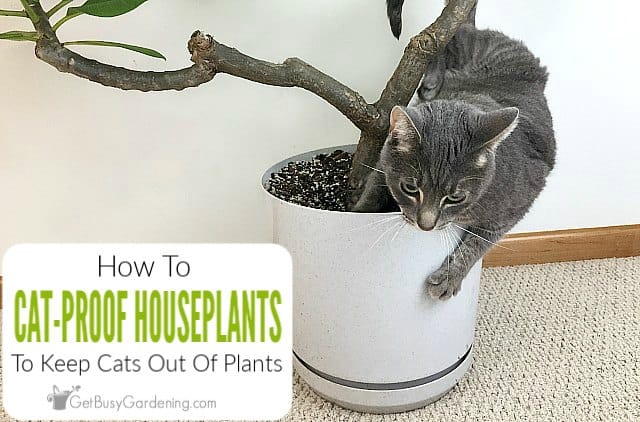 How To Keep Cats Out Of Indoor Plants