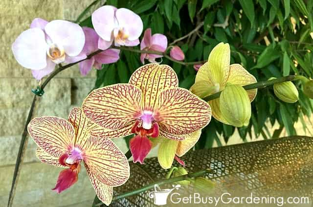 Different types of orchids in bloom