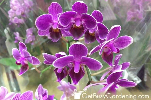 Mini purple orchid flowers
