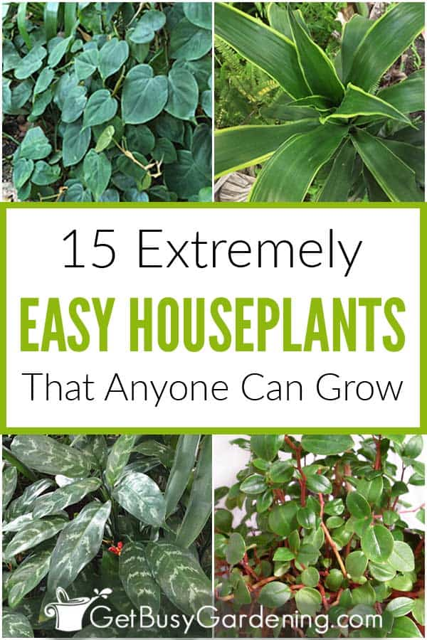 15 Extremely Easy Houseplants That Anyone Can Grow