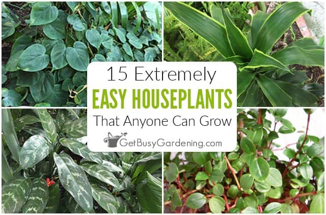 15 Easy Indoor Plants That Anyone Can Grow