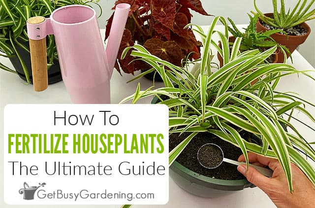 How To Fertilize Houseplants: The Ultimate Guide