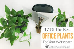 17 Of The Best Office Plants For Your Workspace