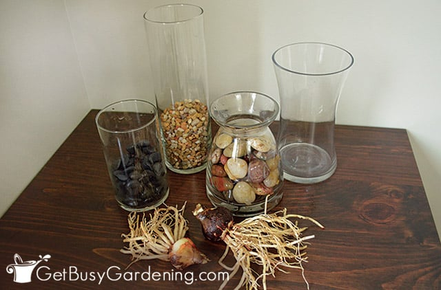 Supplies for planting amaryllis bulbs in water
