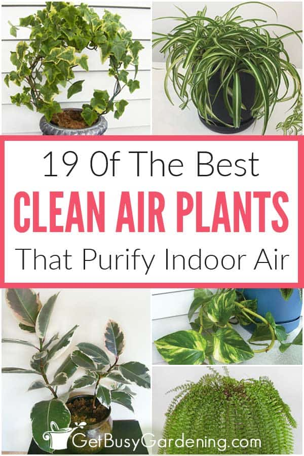19 Of The Best Clean Air Plants That Purify Indoor Air