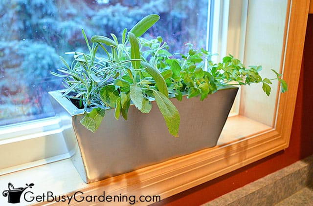 herb garden- cute llittle indoor herb garden