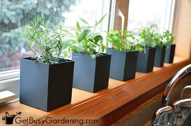 Growing herbs in my kitchen window