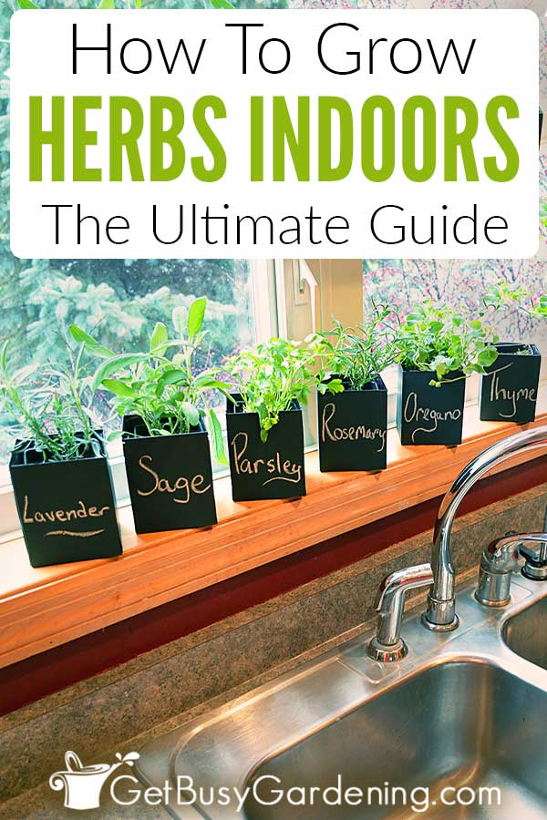 How To Grow Herbs Indoors: The Ultimate Guide