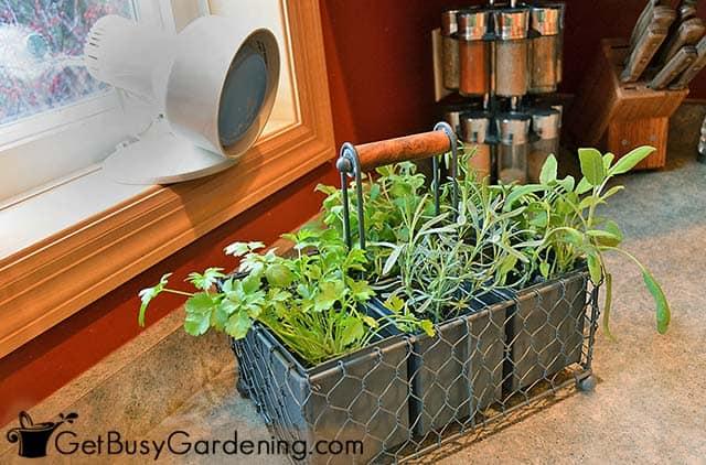 Herb garden - Using an indoor grow light for my herbs