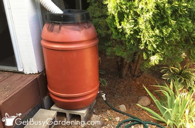 My rain barrel in the backyard