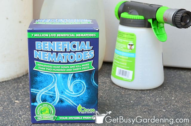 Box of beneficial nematodes and supplies for applying