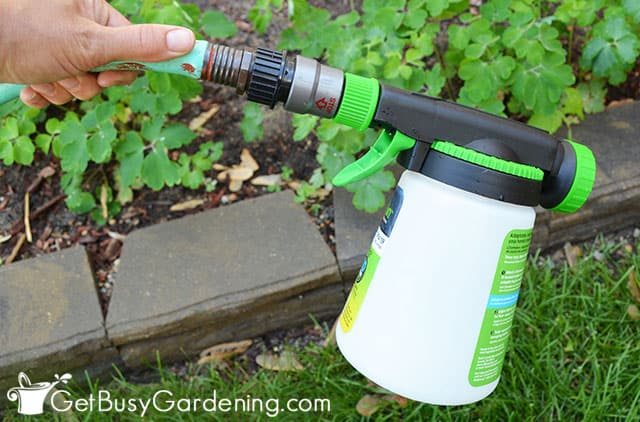 Spraying beneficial nematodes in my yard
