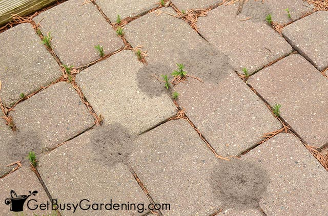Ant hills in my pavers