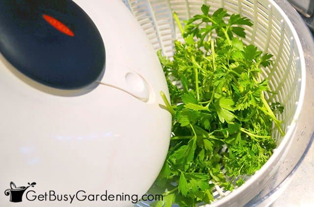 Cleaning parsley leaves